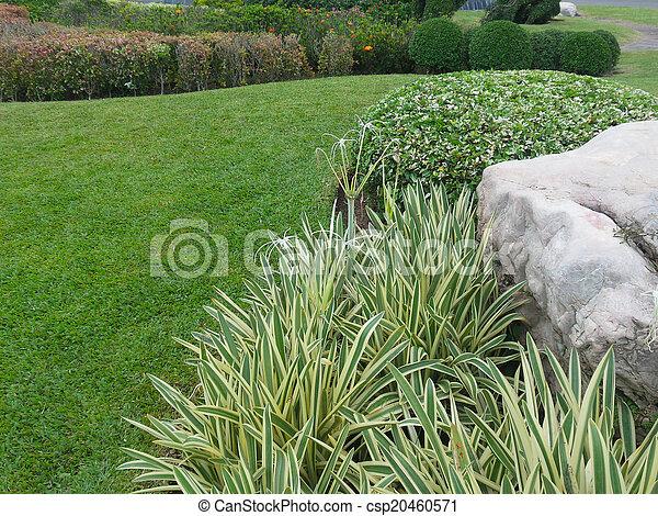 jardin anglais - csp20460571