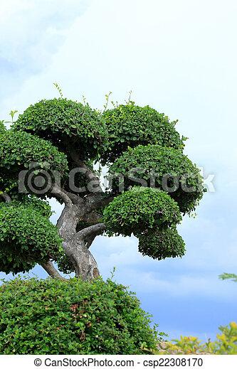 jardin anglais - csp22308170