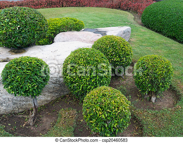 jardin anglais - csp20460583