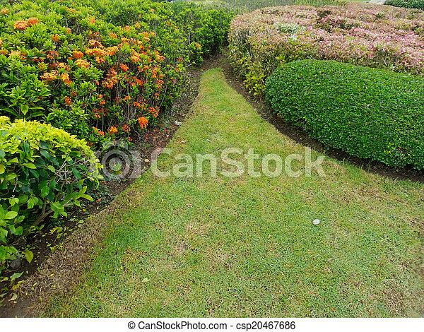 jardin anglais - csp20467686