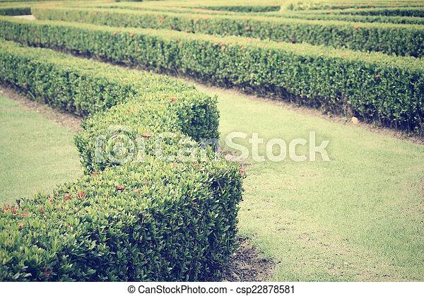 jardin anglais - csp22878581