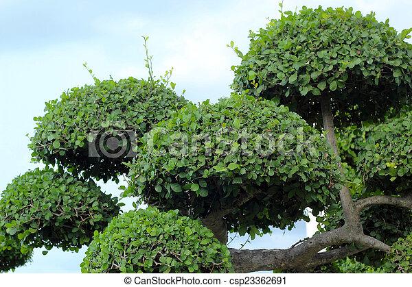 jardin anglais, nature - csp23362691