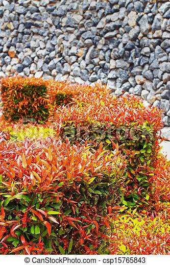 jardin anglais - csp15765843
