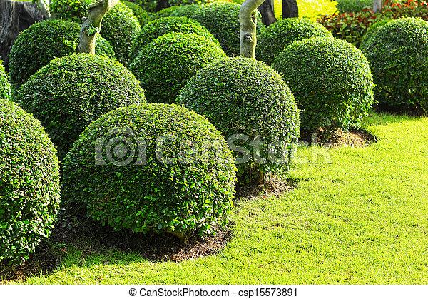 jardin anglais - csp15573891