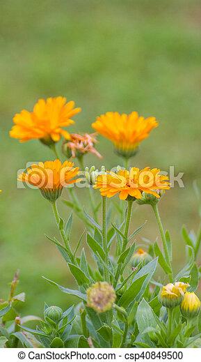 jardin fleur - csp40849500