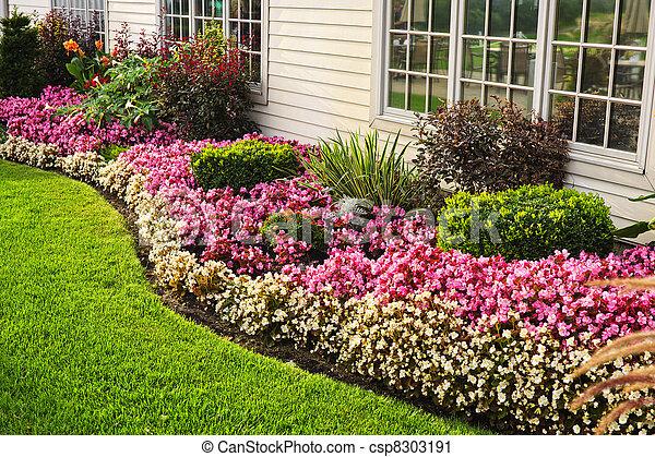 Jardin fleur, coloré. Coloré, mur, parterre fleurs, contre, fenetres ...
