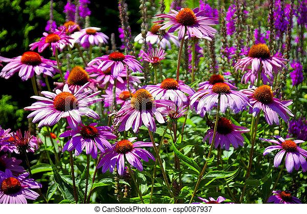 jardin fleur - csp0087937