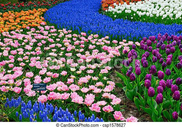Jardin fleur. Beau, (keukenhof, jardin, coloré, fleurs ressort ...
