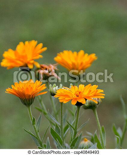 jardin fleur - csp40849493