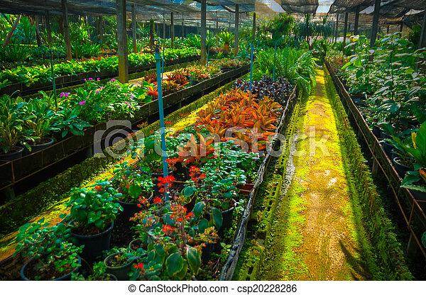 jardin - csp20228286