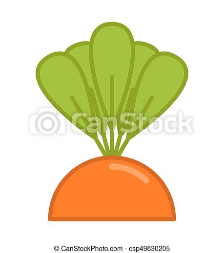 jardin, isolated., lit, carotte, légume, grandir - csp49830205