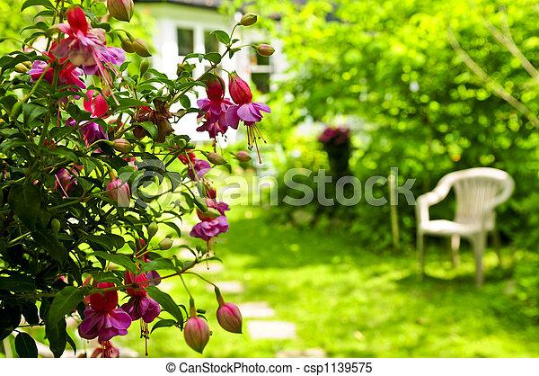 jardin maison - csp1139575