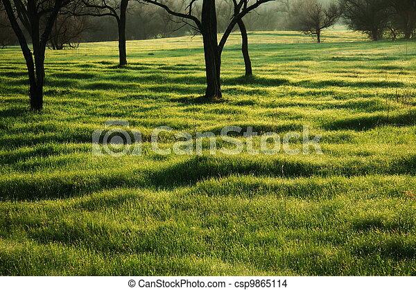 jardin - csp9865114