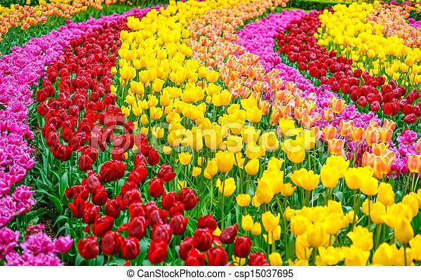 jardin, printemps, tulipe, modèle fond, fleurs, ou - csp15037695