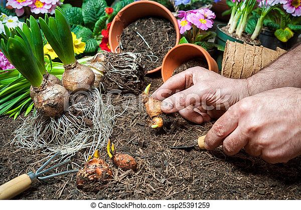 jardinagem - csp25391259