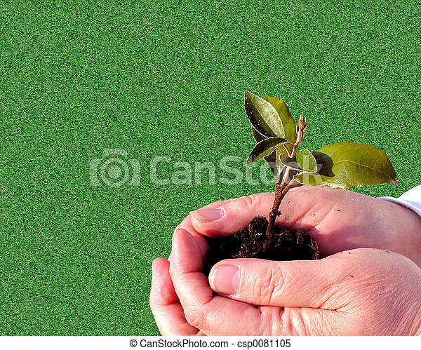 jardinagem, cuidado - csp0081105