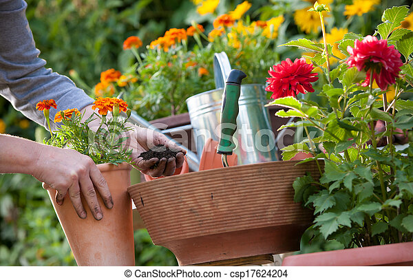 Jardinería - csp17624204