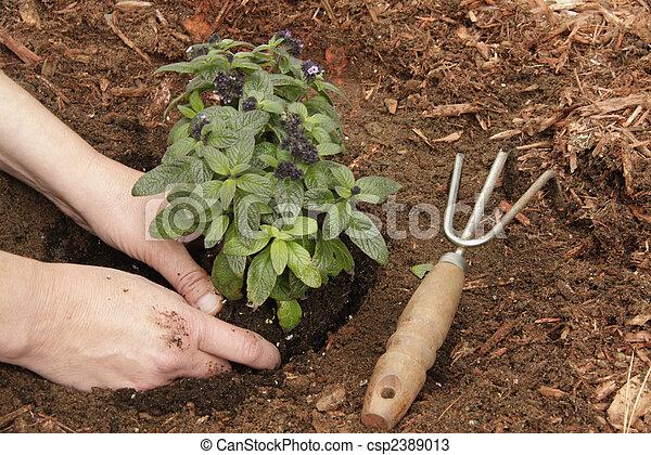 Jardinería - csp2389013