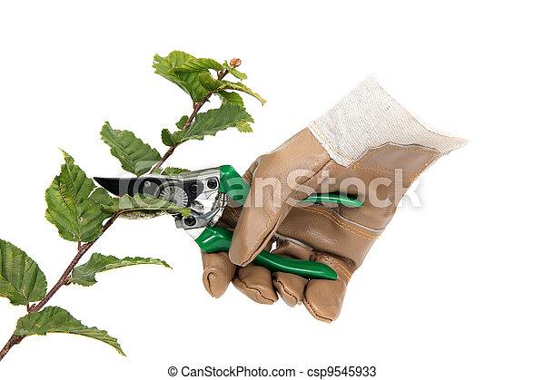 Jardinería - csp9545933