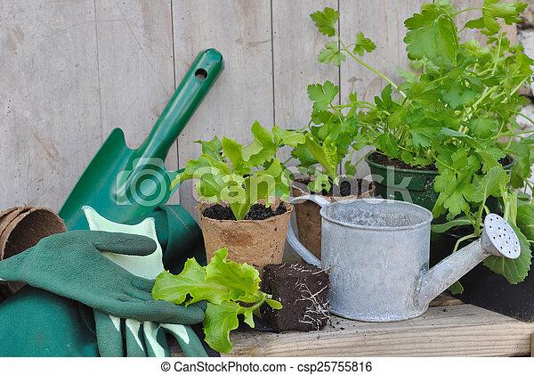 Jardinería - csp25755816