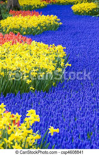 jardines, países bajos, keukenhof, lisse - csp4608841