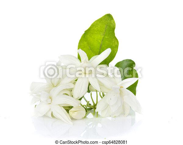 Jasmine isolated on white background - csp64828081