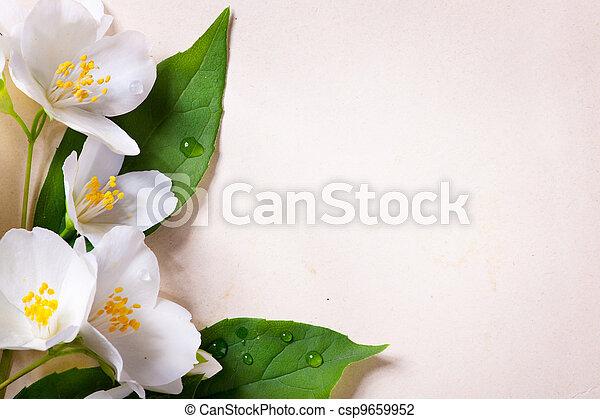 jasmine spring flowers on old paper background - csp9659952