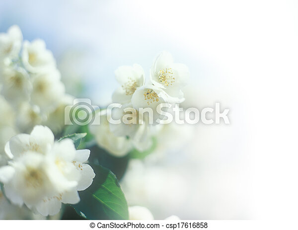 Jasmine. - csp17616858