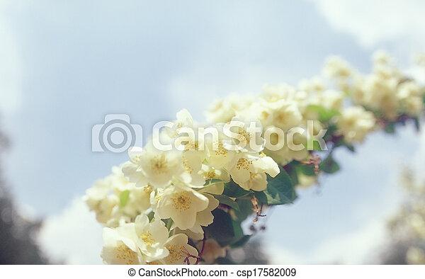 Jasmine. - csp17582009