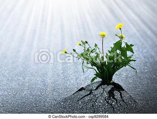 jasny, życie, nadzieja - csp9299584
