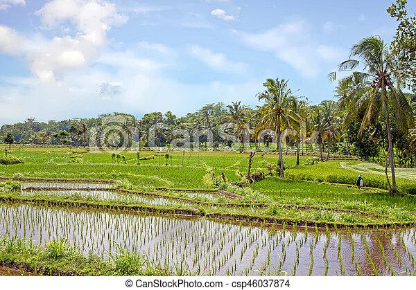 java campagne indon sie champ agricole riz paysage. Black Bedroom Furniture Sets. Home Design Ideas