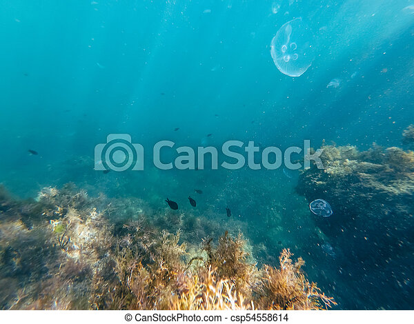 jellyfish and small fish under water on the depth of the sea - csp54558614