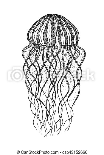 Jellyfish In Line Art Style Vector Illustration Design For Coloring Book Ocean Elements