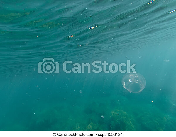 jellyfish in the deep sea in blue clear water - csp54558124