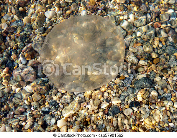 Jellyfish in the sea - csp57981562