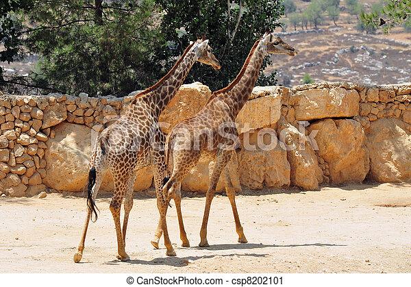 Jerusalem Biblical Zoo - csp8202101
