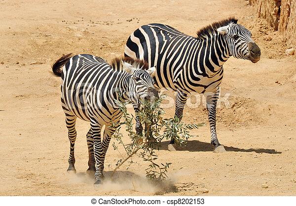 Jerusalem Biblical Zoo - csp8202153
