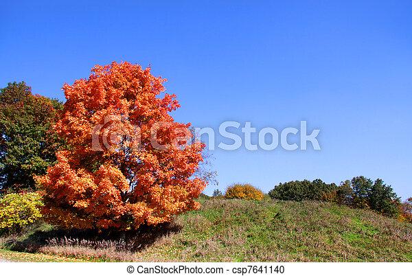 jesień, jasny, drzewo - csp7641140