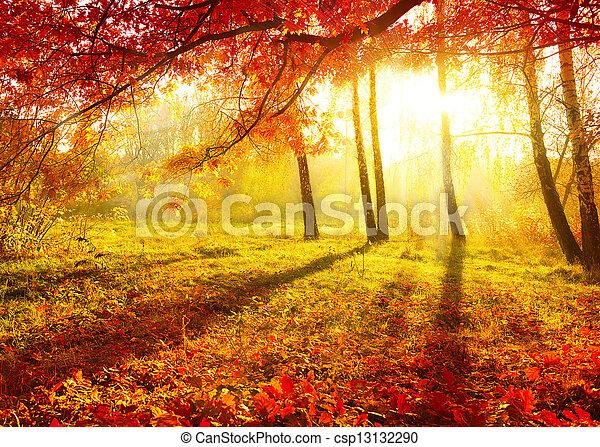 jesienny, drzewa, leaves., jesień, park., upadek - csp13132290