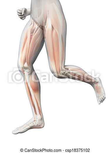 Jogging woman - visible leg muscles - csp18375102