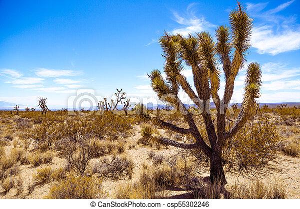 Joshua Tree en el desierto americano - csp55302246
