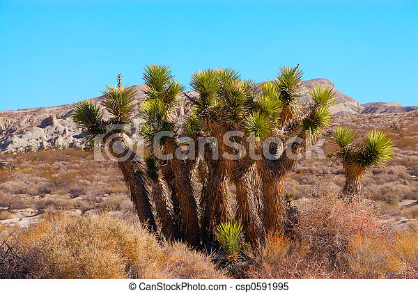 joshua, tod, usa, national, baum, park, tal, kalifornien - csp0591995