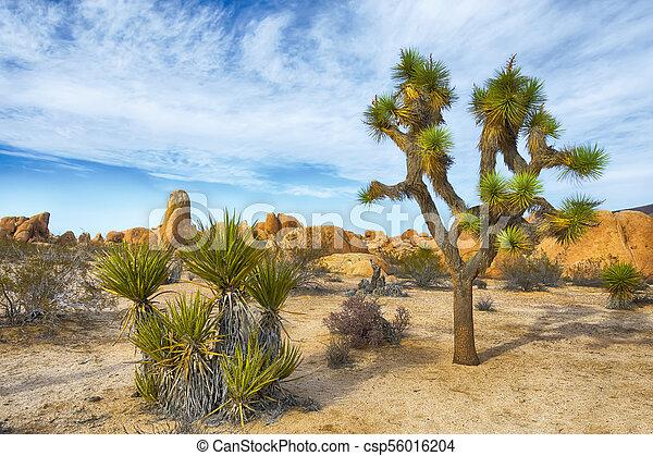 Joshua Tree National Park - csp56016204