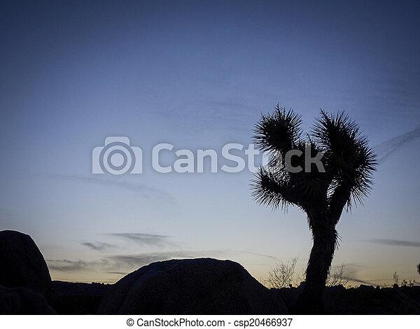 Joshua Tree National Park, USA - csp20466937