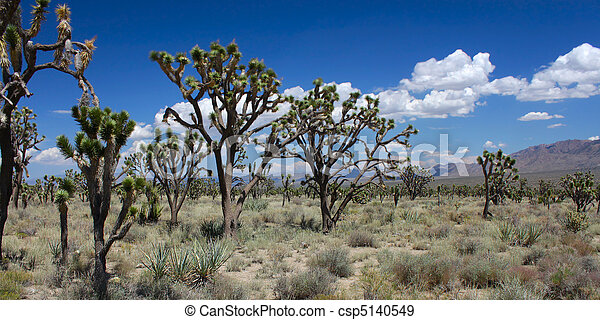 Joshua Trees in the Mojave Desert - csp5140549