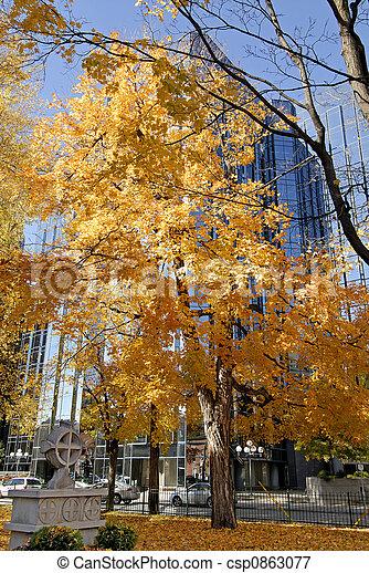 jour ensoleillé, automne - csp0863077