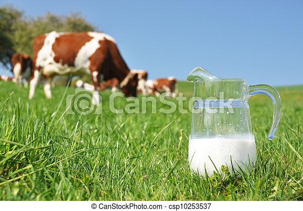 Jug of milk against herd of cows. Emmental region, Switzerland - csp10253537