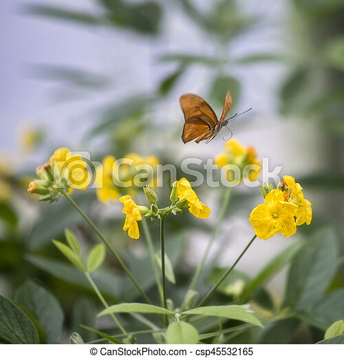Julia butterfly lepidoptra nymphalidae butterfly on vibrant yellow flowers - csp45532165
