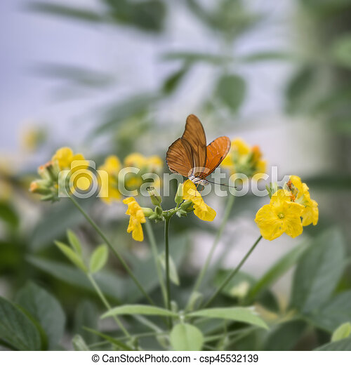Julia butterfly lepidoptra nymphalidae butterfly on vibrant yellow flowers - csp45532139