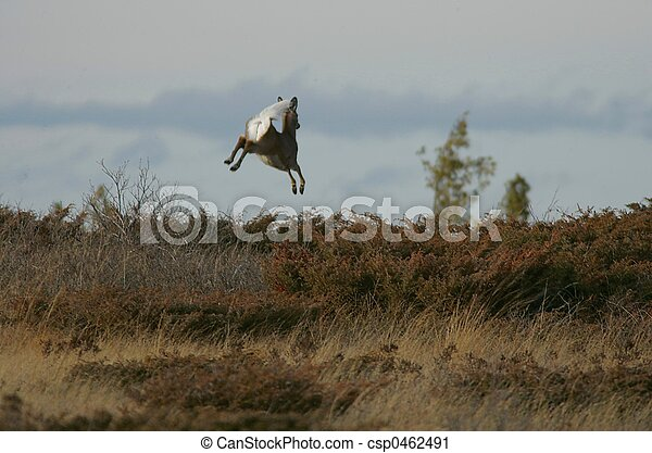 jumping deer - csp0462491